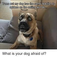 Afraid Of Spiders Meme - afraid spider dog meme spider best of the funny meme