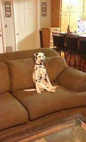 Sitting Meme - whenever i go to my mom s house orion is always sitting on the