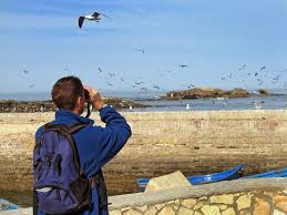 where to volunteer with your children on long island where to go birdwatching on long island