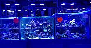 aquarium design exle london s aquatic design centre is an aquarium store that has it all