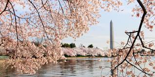 12 best places to see cherry blossoms in full bloom in spring 2017