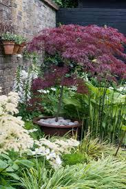 the 25 best japanese maple garden ideas on pinterest acer