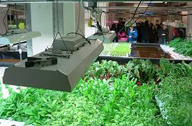 vertical farming attra national sustainable agriculture