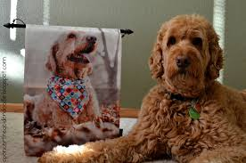 Customize Your Own Flag Spencer The Goldendoodle Flagology Custom Printed Flags Review