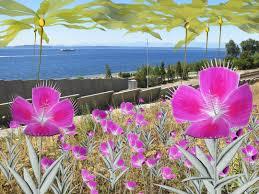 tamiko thiel gardens of the anthropocene seattle art museum sam