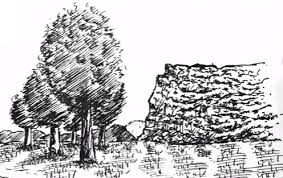 pen and ink drawing composition themes with trees my pen and