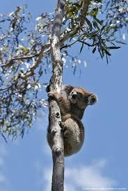 97 best home studies australia images on pinterest nature