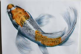 photos koi fish drawings realistic drawing art gallery