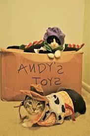 Kitten Halloween Costumes Pet 46 Halloween Costumes Cats Images Animals