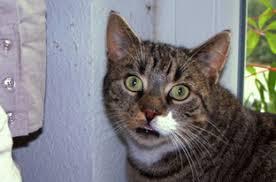 gerüche die katzen nicht mö die macht der düfte