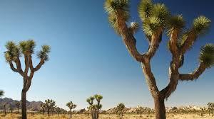 native nevada plants yucca san diego zoo animals u0026 plants