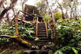 Best Treehouse 5 Of The Best Treehouses On Airbnb Castles Carey