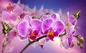Purple Orchids Purple Orchid Free Pictures On Pixabay