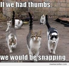 Mean Cat Memes - mean cats by ben meme center