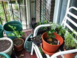 our balcony farm an apartment dwellers u0027 permaculture experiment