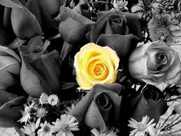 best 25 yellow rose flower ideas on pinterest yellow roses