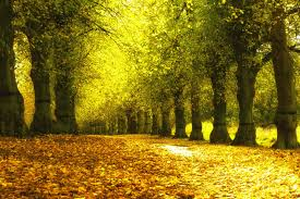 25 autumn wallpapers backgrounds images pictures design