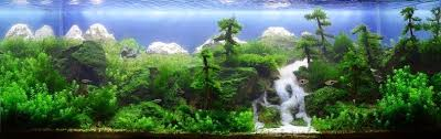 Aquarium Aquascapes The Incredible Art Of Underwater Landscaping For Aquariums