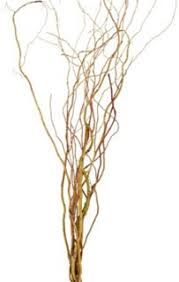 Curly Willow Branches Online Wholesale Bulk Discount Wholesale Curly Willow Tips