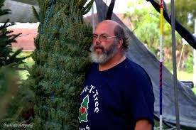 hart t tree farms christmas tree lot tamarac florida