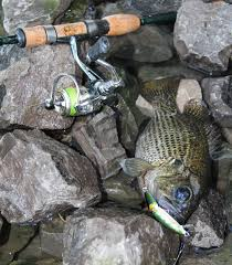 ultra light rod and reel ultralight fishing for panfish with the rapala f2 spinning rod
