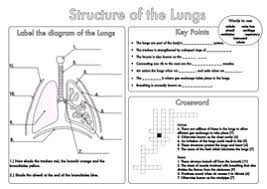 gcse revision lung structure worksheet by beckystoke teaching