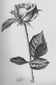 simple pencil sketches of love flowers drawing sketch library