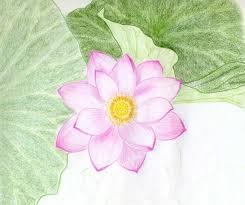 lotus flower drawings made easy sanatoriy ulitkino ru
