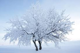 tree with snow and background stock photo image 23285804