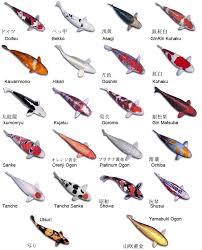 koi fish coy fish types aquarium recipeapart