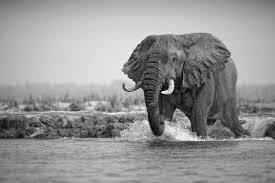 49 free modern stunning elephant wallpapers bsnscb