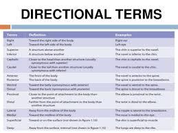 Human Anatomy Terminology Anatomy Female Body Www Uocodac Com Part 2