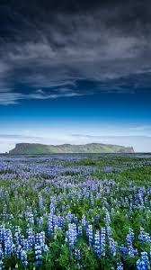 flower wallpaper for nokia x hd background field of flowers grass blue sky violet wallpaper