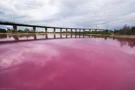 Pink Lake Pink Lake Pink Pinterest Pink Lake And Lakes
