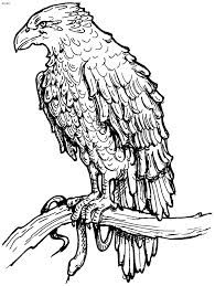 hawk coloring sheet tailed in flyght page the undertaker coloring