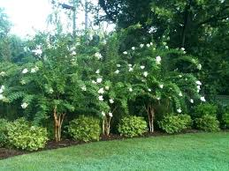 Privacy Backyard Ideas Landscaping For Privacy Backyard Privacy Landscaping Ideas Large