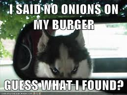 Dog Driving Meme - wolfy hates onions i has a hotdog dog pictures funny pictures