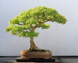 about bonsai artificial bonsai tree store