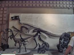 what happens when a non accredited paleontology fan blogs an allosaurus is featured on the mural and the holotype is part of the yale collection but the bones are displayed on the walls rather than with its prey