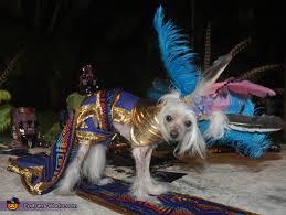 Mayan Halloween Costume Princess Dog Costume