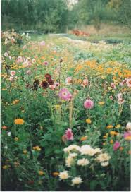 wild flowers in wild meadows 463 best wildflowers images on pinterest wildflowers field of
