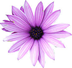 purple flower image purple flower png 5 png animal jam clans wiki fandom