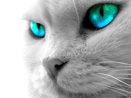 fondos de ojos gato
