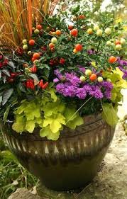 fall container garden plant list 1 kale 2 ornamental peppers 3