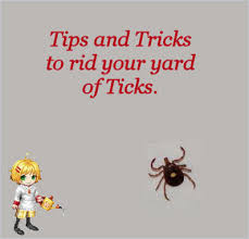 How To Find Ladybugs In Your Backyard How To Get Rid Of Ticks Around Your Yard Yards Gardens And Outdoors