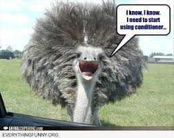 Ostrich Meme - funny caption ostrich i know i need conditioner home pinterest