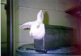 why rabbits need your help more than any other animal peta