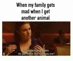 Crazy Mom Meme - a animal addiction mad scientist crazy mom