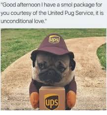 Birthday Pug Meme - 25 best memes about pugged pugged memes
