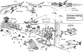 science coloring pages food web coloring page
